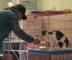 Un homme vient nourrir un chat dans un refuge mais celui-ci ne veut pas que manger !
