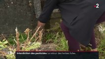 Pesticides : les herbes folles font leur retour