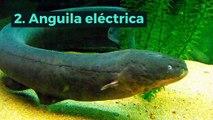 10 animales que solo existen en el Amazonas