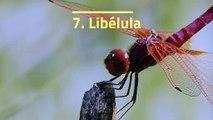 Los 10 animales con menos esperanza de vida del planeta