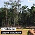 L'exploitation de l'or et du pétrole, autre péril pour l'Amazonie