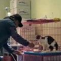Un chat qui cherche quelque chose autre que la nourriture