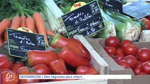 SECHERESSE Des légumes plus chers