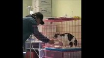 Alors qu'il vient nourrir un chat, ce bénévole va avoir la plus belle preuve d'amour de l'animal