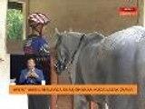 Kejohanan kuda lasak  Empat remaja wakili Malaysia & Asia Tenggara ke Kejohanan Kuda Lasak Dunia