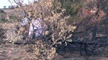 Profesörden orman yangınlarına ilginç eylem...Yanmış çam ağacıyla bitki yaşamına uygulanan şiddete dikkat çekti