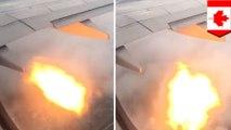 Swoop flight makes emergency landing after bird strike