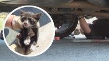 Sauvetage d'un chaton coincé sous la voiture d'un couple