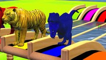 Learn Wild Animals Swimming Race In Outdoor Playground For Kids