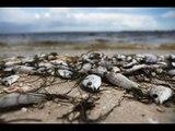 """Une """"marée rouge"""" dévastatrice ravage la faune marine en Floride (et le tourisme)"""
