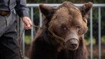 Montreurs d'ours : les associations veulent sauver Mischa