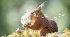 La photo animale la plus amusante ? Voici les 30 meilleurs clichés du concours !