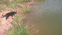 Un chat pêcheur plutôt efficace