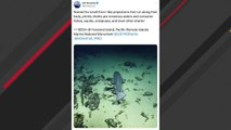 Ocean Expedition Crew Captures Prickly Shark On Camera