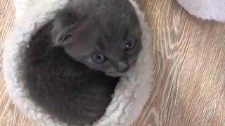Cute Kitten Hides Inside Fuzzy Slipper