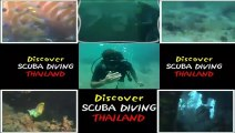 Koh Tao island in thailand, coral diving reef,  triggerfish, fish with Thailand Diving Pattaya club