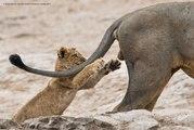 Voici les animaux les plus drôles des Comedy Wildlife Photography Awards