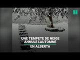 Au Canada, une tempête de neige a annulé l'automne