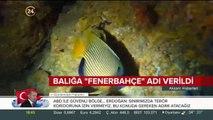 Türkiye sularında ilk kez rastlanan balığa Fenerbahçe ismi