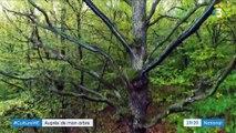 """Exposition : """"Nous, les arbres"""" attire de nombreux curieux"""