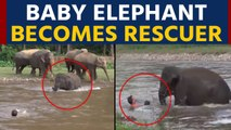 Baby elephant runs to save man from drowning, video goes viral |OneIndia News