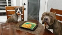 Dogs Innocently Stare at Owner After Getting Caught Eating Spaghetti