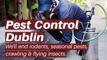 pest control dublin - elite pest control - termite control dublin