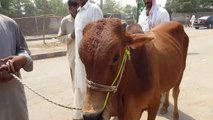 Eid k Baad RATES 22nd August 2019 - Bakra Eid 2019 - Bakra Mandi Pakistan