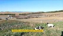Cantal : les éleveurs en difficulté à cause de la sécheresse