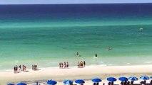 Un requin s'approche dangereusement d'une fille en bord de plage - Destin, Fl