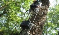 جهاز آلي لتقليم الأشجار... لن تضطروا لتسلقها بعد اليوم