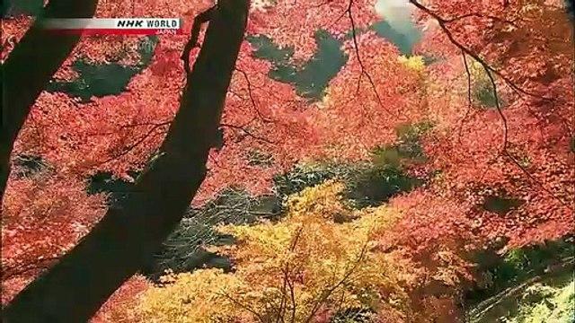 Japanology Plus - Mt. Takao