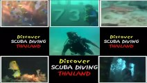 White rock in Koh Tao thailand, coral dive, fish and reef with Thailand Diving Pattaya club