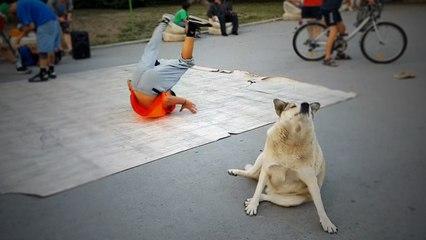 Vierbeiner hat den Dreh raus: Streunender Hund tanzt mit Breakdancer