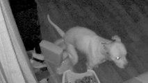 Stubenrein: Dieser schlaue Hund geht aufs Töpfchen