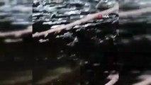 Sakarya'da toplu balık ölümleri