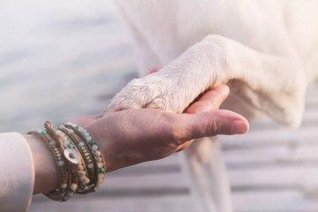 Der Verlust eines Hundes, so schwer wie der Verlust eines geliebten Menschen?