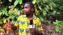 Agriculture - 7info à la découverte du président de l'association des producteurs de café et de cacao de la région de l'ouest montagneux, Doua Blonde Obed