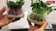 VIDEO. Veigné : ils cultivent des plantes dans un ancien contener maritime