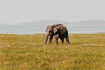 60% weniger Wildtiere: WWF schlägt Alarm