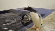 Ein kleiner Pinguin lernt Schwimmen