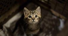 Un octogénaire noie un chaton qui faisait ses besoins dans son jardin, sous les yeux de la propriétaire de l'animal