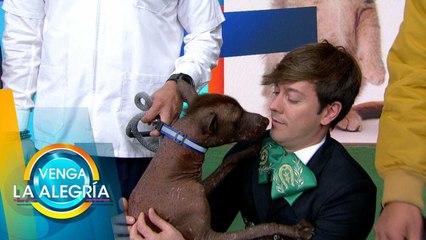 Xoloitzcuintle, ¡un perrito muy mexicano! | Venga la Alegría