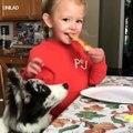 Ces chiens aiment la pizza! Trop Mimi !Admirez les ! Admirez ce qu'il fait !