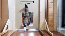 Réduire la taille d'une chatière