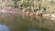 Bystander Spots Baby Foal Half Submerged in Water