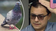Pigeon poops on lawmaker complaining about bird dookie