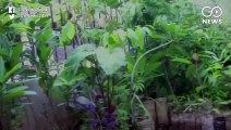 Karnataka Environmentalist Houses Herbal Heaven In His Garden
