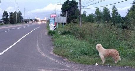 Pendant 4 ans, ce chien a attendu sa famille à l'endroit même où il s'était perdu, avant de la retrouver