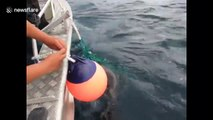 Heartwarming moment Canadian fisherman rescued sea lion pup trapped in fishing nets